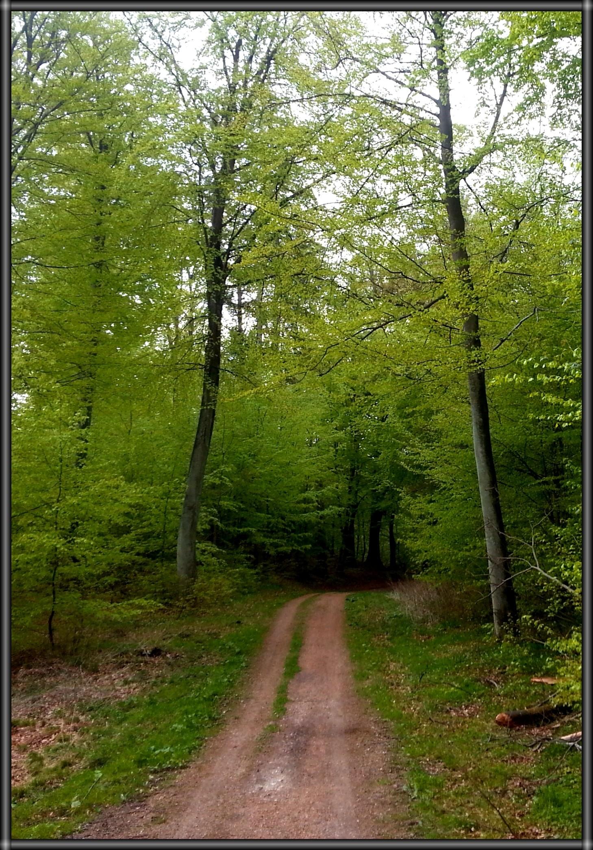 A quiet walk in hobbitland. Hareskoven, Denmark