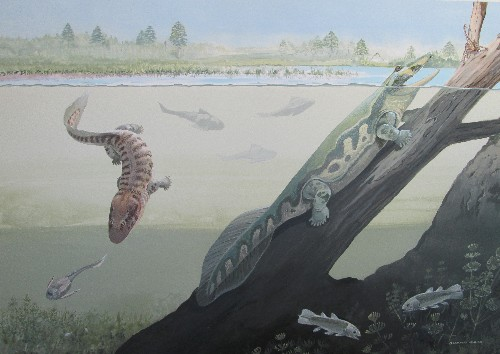 South African fossils rewrite early history of life on land