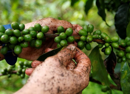 App looks to get tips from coffee drinkers to Colombia growers