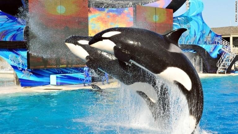 'Ask SeaWorld' marketing campaign backfires