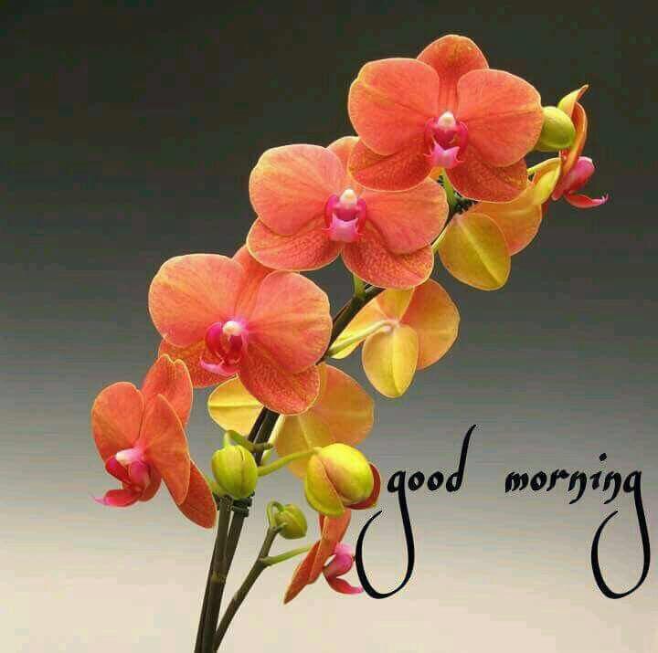 ♥️🌹♥️ Have a beautiful Sunday ♥️🌹♥️