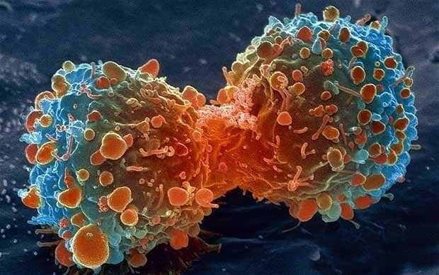 You get to live longer, but you might get cancer. On balance, that's a good thing