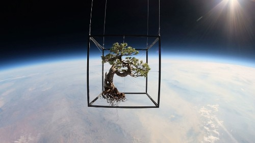 What A Bonsai Tree Looks Like Suspended In Space