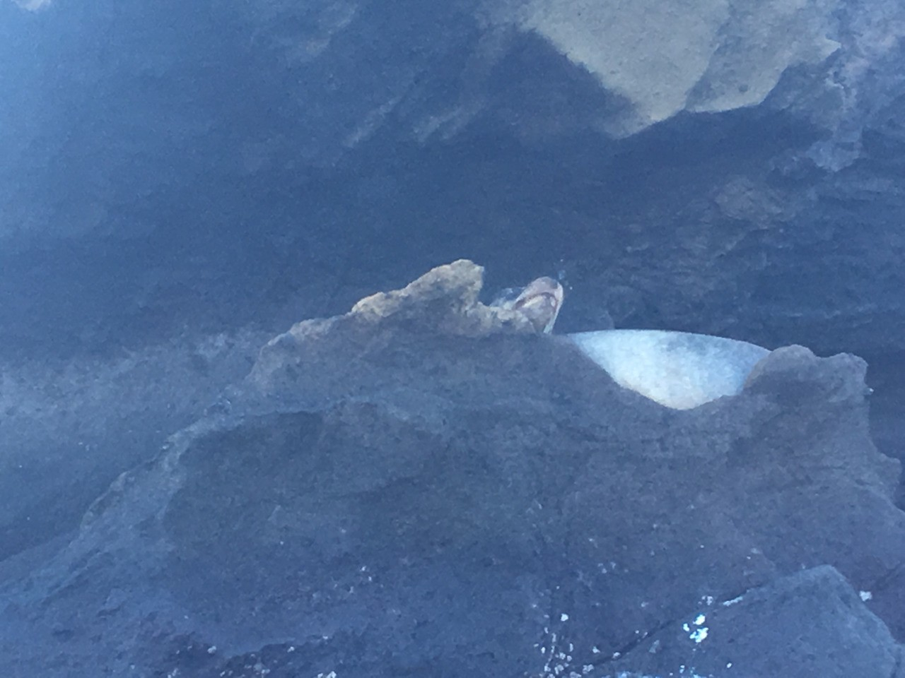 Our first sea lion sighting!