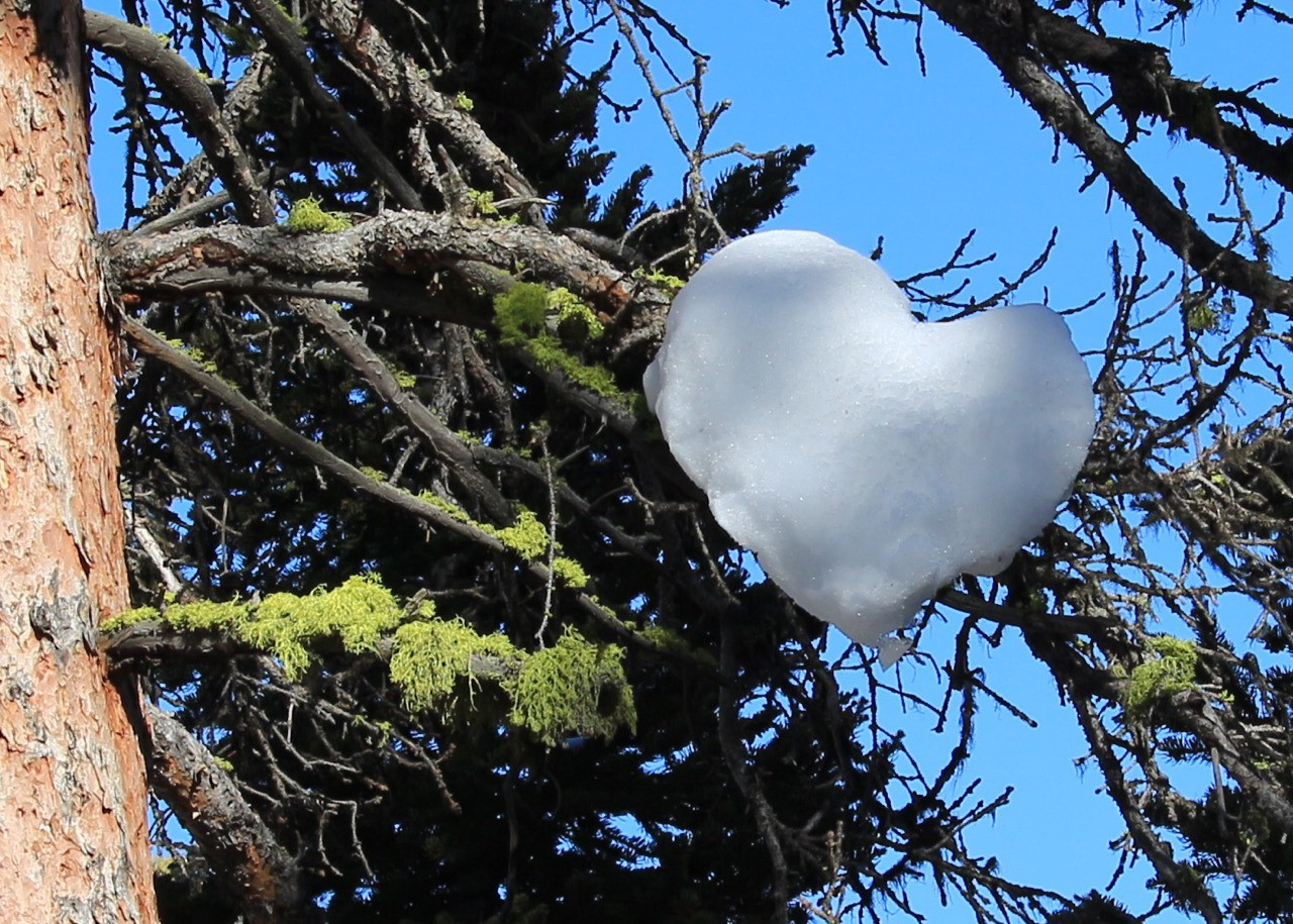 Photos taken in and around Yellowstone. By Carol S Bock Taken on Valentines Day at the Lower Falls.