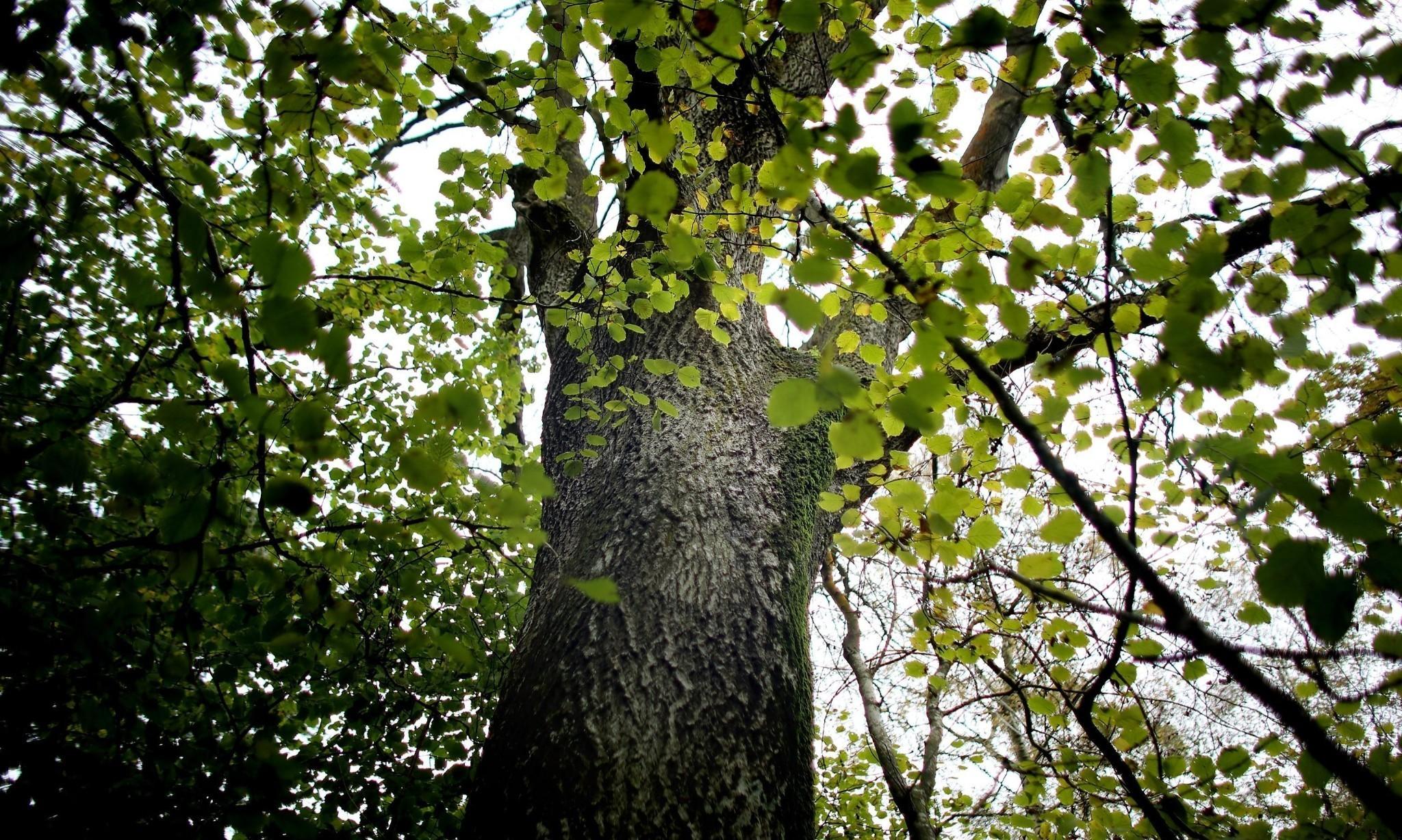 Scientists use people power to find disease-resistant ash trees
