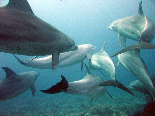 Ukraine Really Wants Its Militarized Dolphins Back From Russia