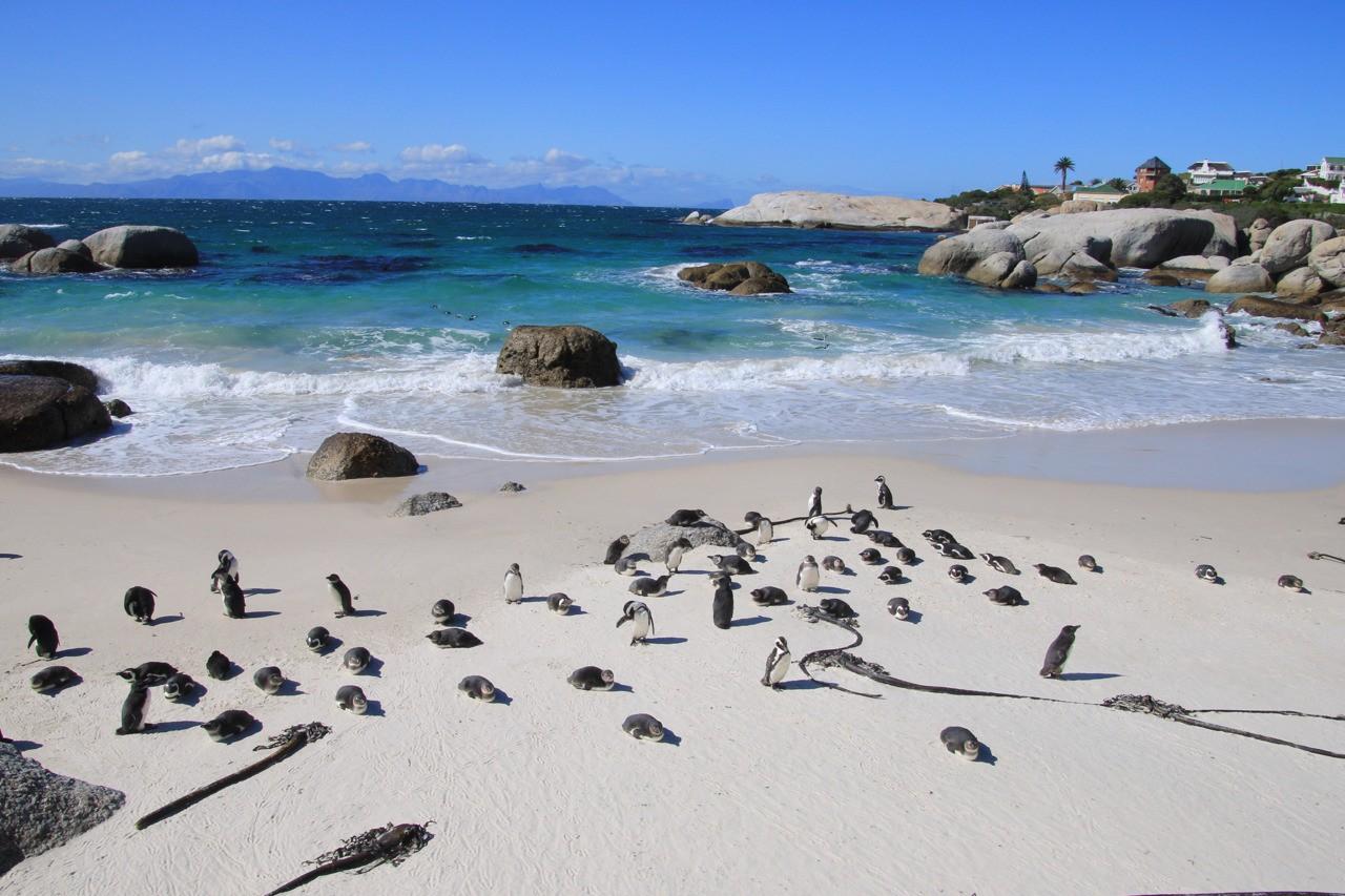 Beautiful Boulders Beach, Cape Town South Africa.