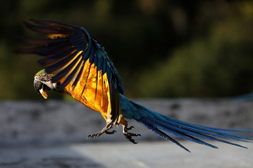 Macaws offer feathered 'therapy' to suffering Venezuelans