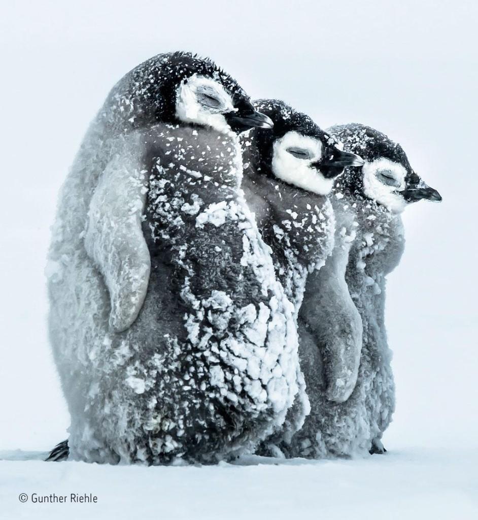Ormiston Bolingbroke Sixth Form Wellbeing Web Magazine December 2016 - Titel