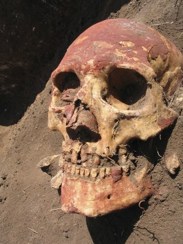'Black Death' germ has afflicted humankind longer than suspected