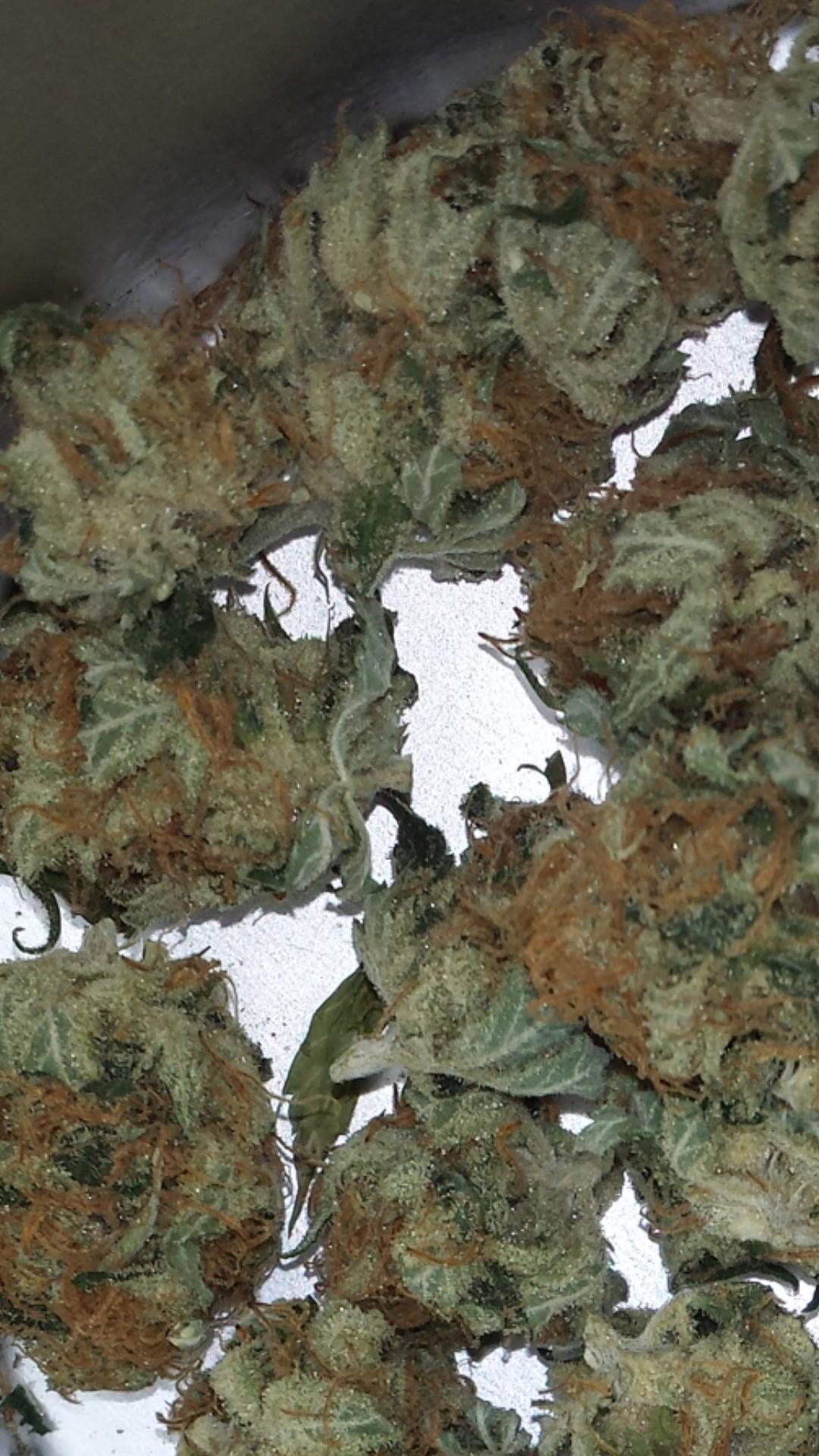 #marihuana #legalizacion #autocultivo