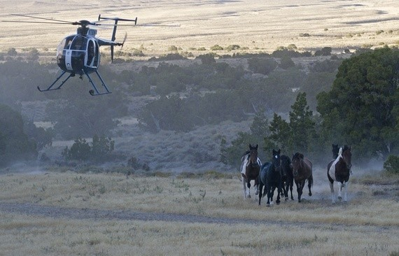 On Wild Horses, the Secretary of the Interior Needs to Listen to the Scientists