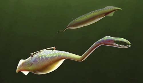 What is a Tully Monster? Scientists finally provide an answer