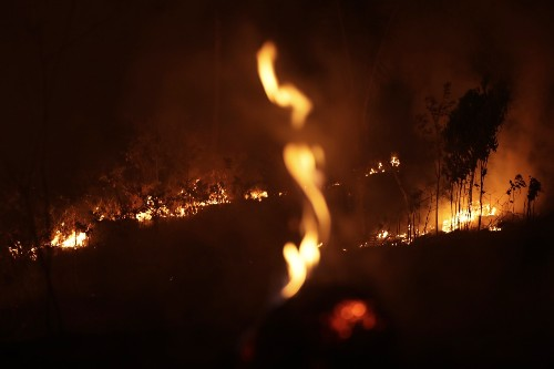 The Amazon Is Burning: Pictures