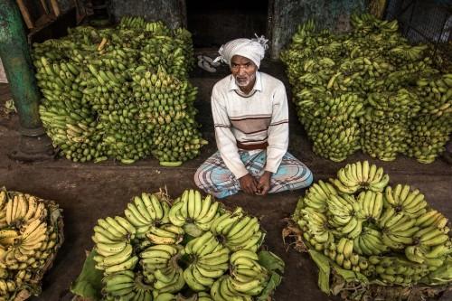 Yes, We May Have No (Cavendish) Bananas