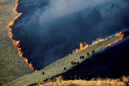 Wildfire acreage way down in California this year _ so far