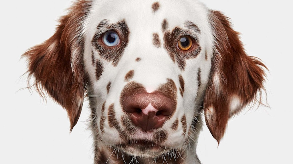 'Good Dog: A Collection of Portraits' Celebrates Human's Greatest Companions