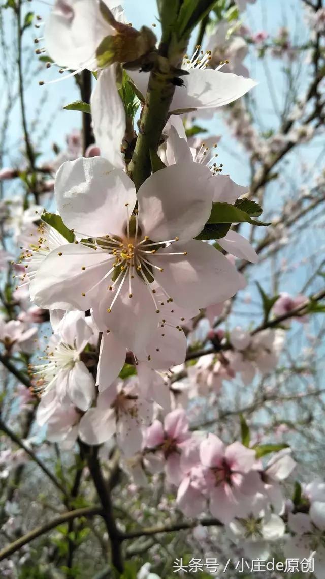 我在花间漫步, 欣赏遍地的花团锦簇, 这是否, 是与你一起走过的路?