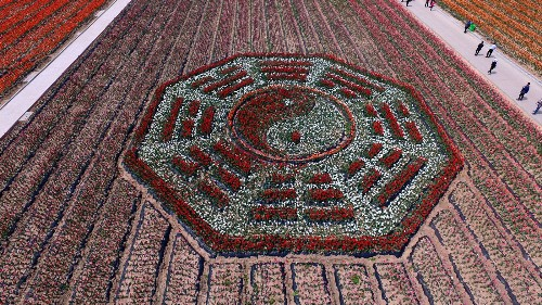 Flower Power in China: Pictures