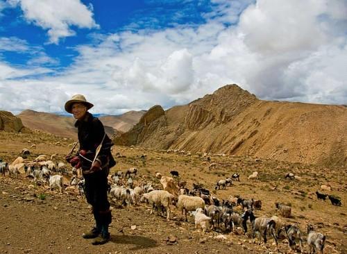 Extinct Humans Passed High-Altitude Gene to Tibetans