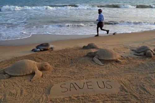 US govt sued over sea turtles snared in shrimp nets