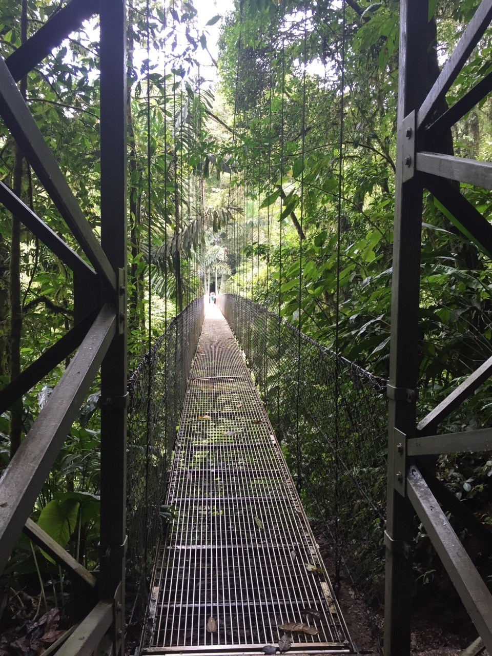 A hike along hanging bridges.