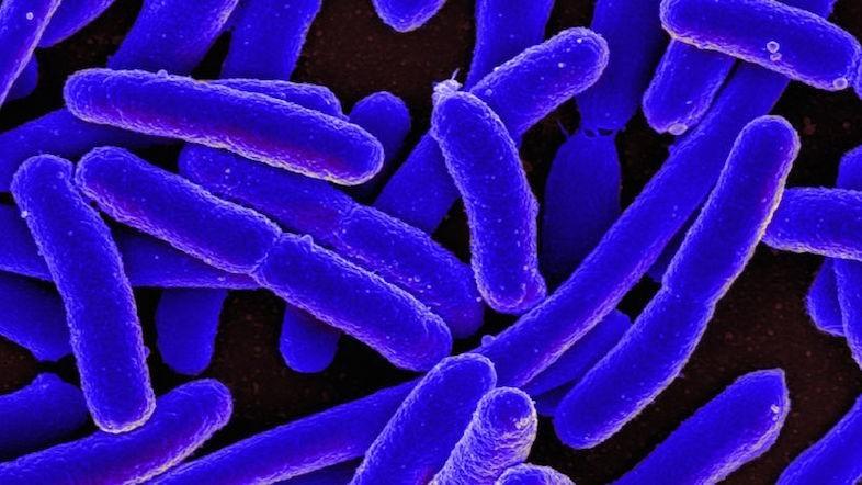 抗生物質が効かない細菌退治に。DNAをズタズタに噛み砕き殺す「CRISPR-Cas3」