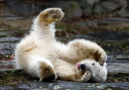 Polar bear cub makes Berlin zoo debut
