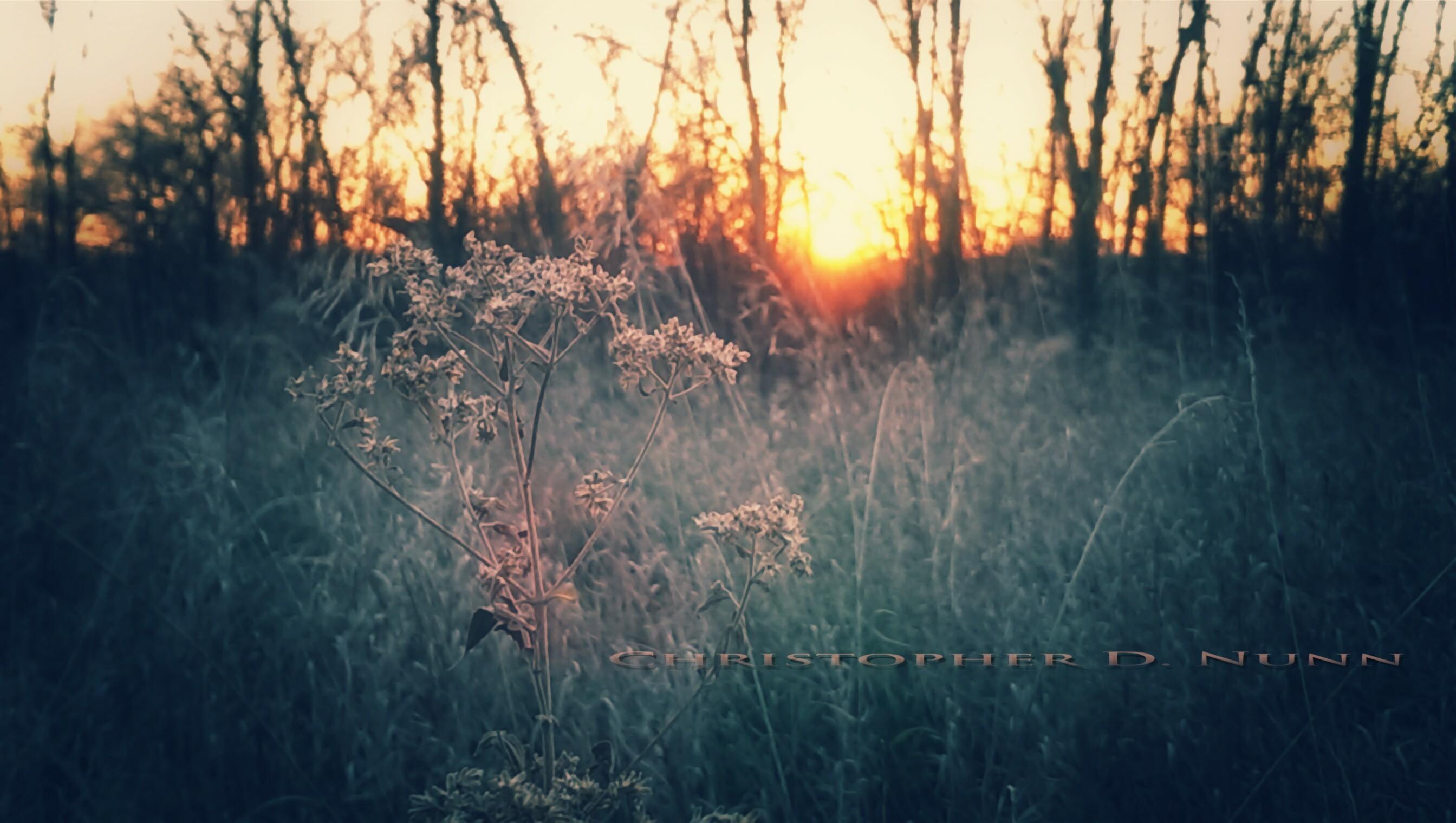 Beauty Even in a Barren Place ~ cDn