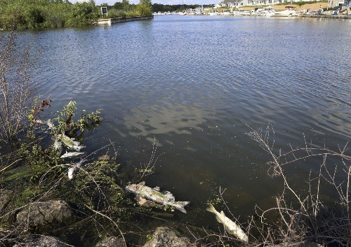 Steel mill sorry for spill that killed fish, closed beaches