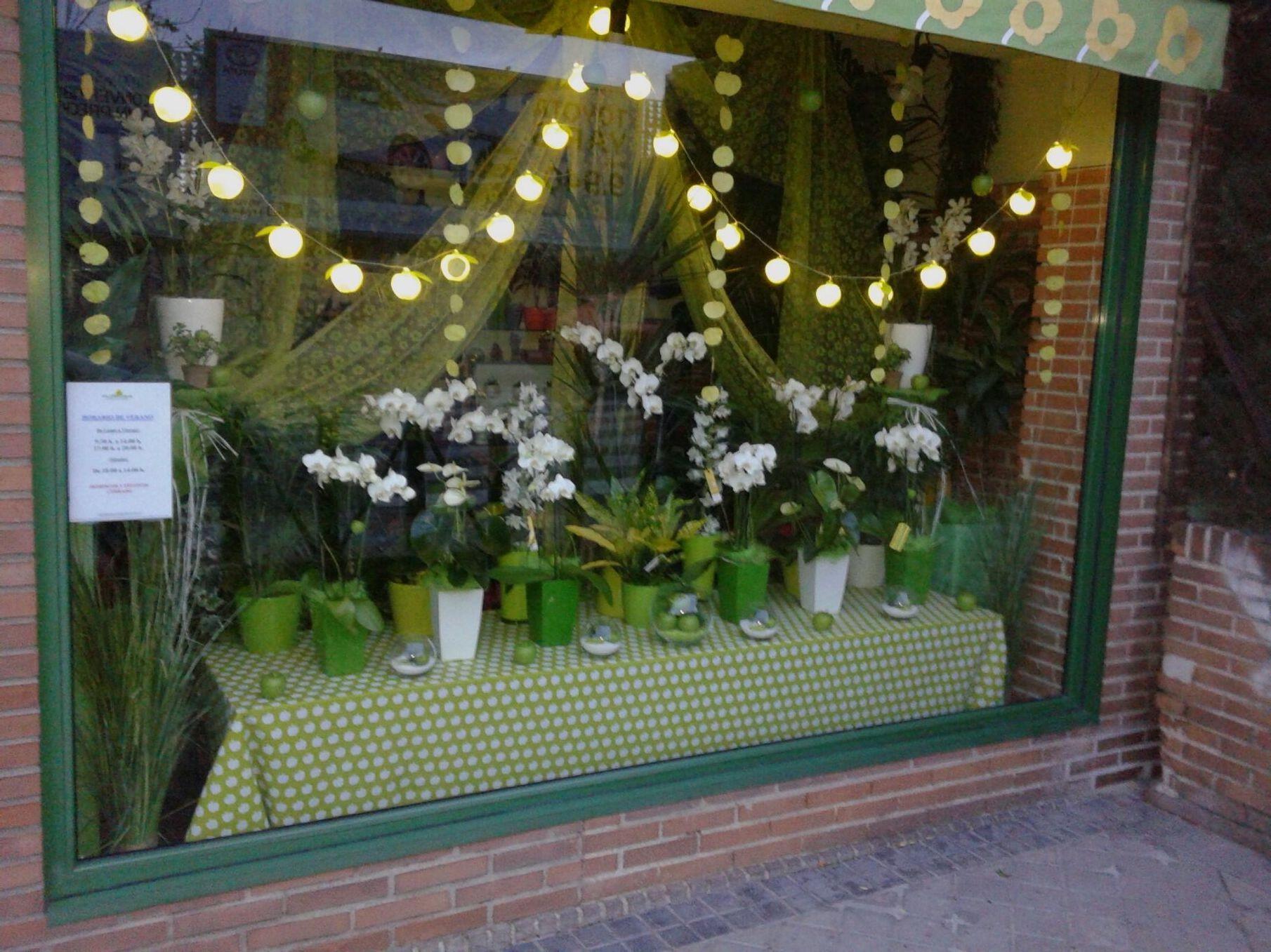 Precioso escaparate diseñado por Irene para Floridea para empezar el otoño verde, muy verde. Orquídeas y manzanas.