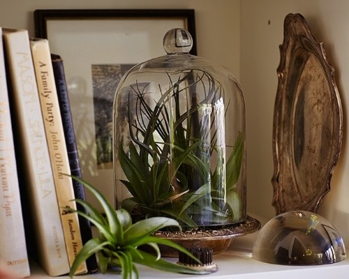 Gardening 101: How to Water an Air Plant