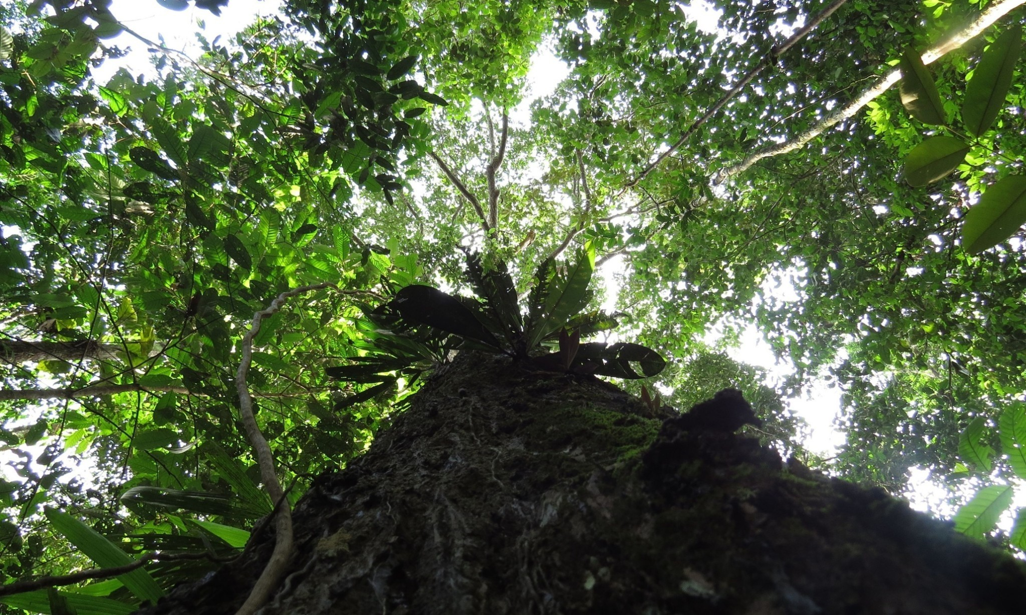Amazon's trees removed nearly a third less carbon in last decade – study
