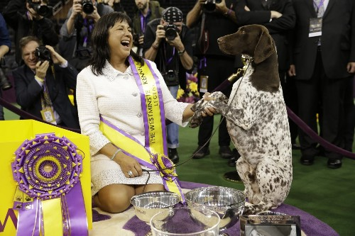 C.J., the German Shorthaired Pointer, Is Best in Show: Pictures
