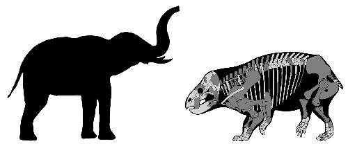 Surprising elephant-sized mammal cousin lived alongside dinosaurs