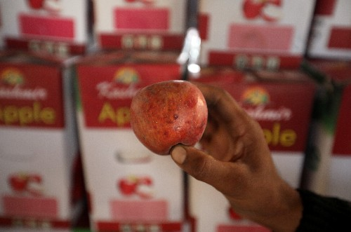 Apples rot in Kashmir orchards, as lockdown puts economy in tailspin