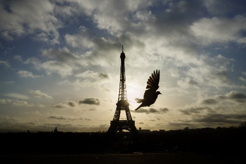 The Eiffel Tower Stands Strong: Pictures
