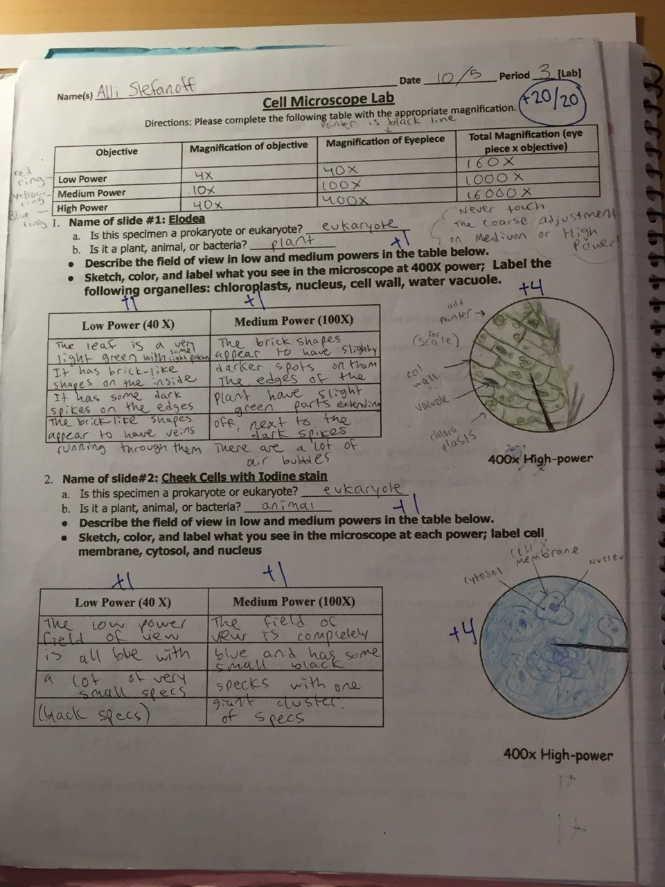This is a photo of my Cell Microscope Lab report. This is in my passions section because it was one of my favorite labs to do. It was amazing to see all the cells underneath the microscope!