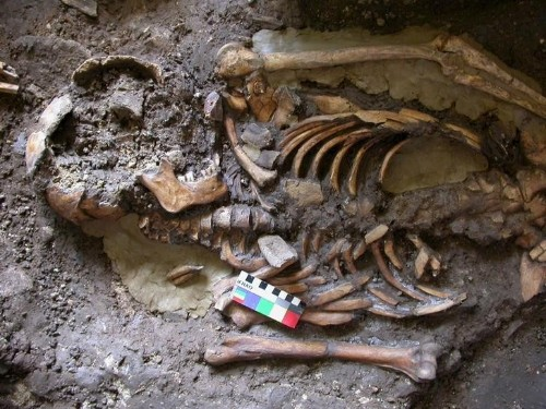 Genetic sleuthing helps sort out ancestry of modern Europeans