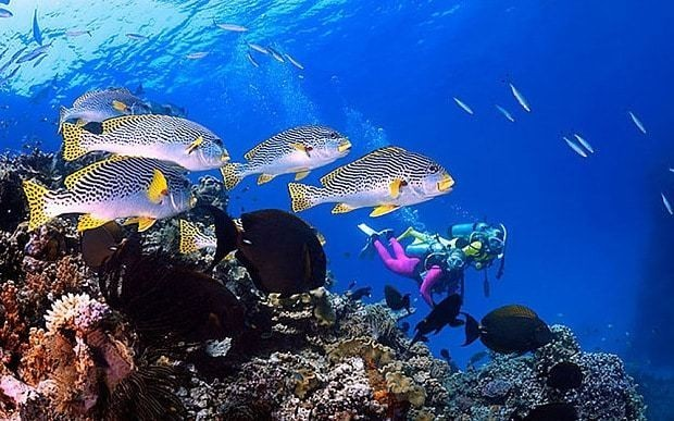 Great Barrier Reef fish populations 'restored to pre-European settlers levels'