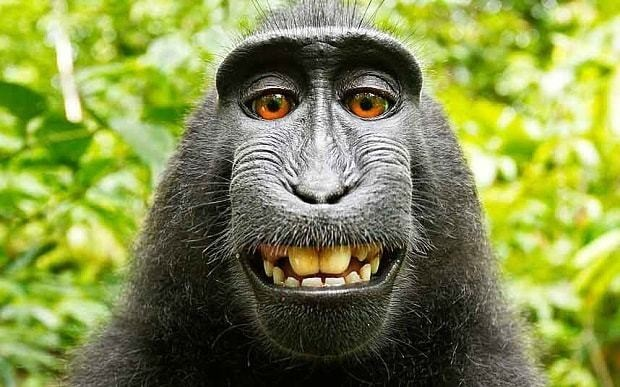 Monkeys, ghosts and gods 'cannot own copyright' says US