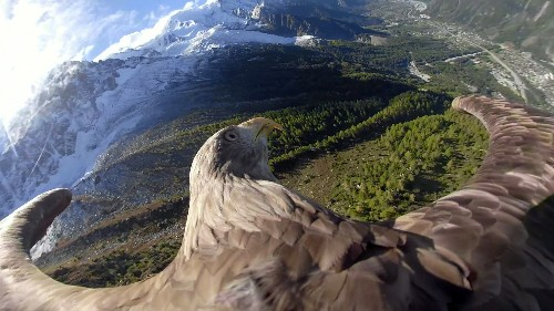 Victor the eagle's bird's eye view of the Alps raises climate change awareness