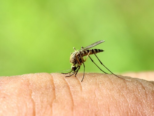 Why mosquitoes bite some people and not others