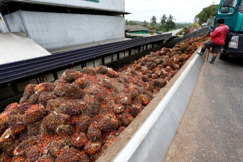 Palm oil prices to climb 17.9% in 2020 on tight supplies, biodiesel programmes: Reuters poll