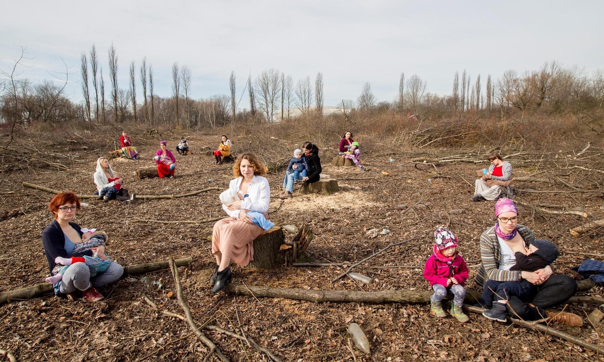 Polish law change unleashes 'massacre' of trees