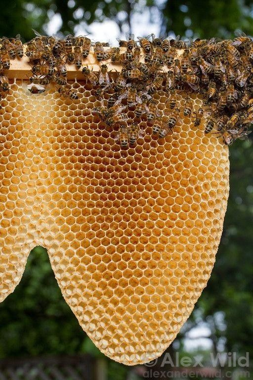 """🐝""""bee""""... honey 🍯 - cover"""