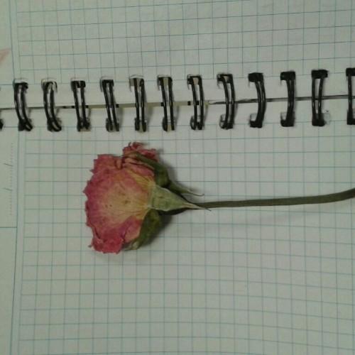 Foto - Cover