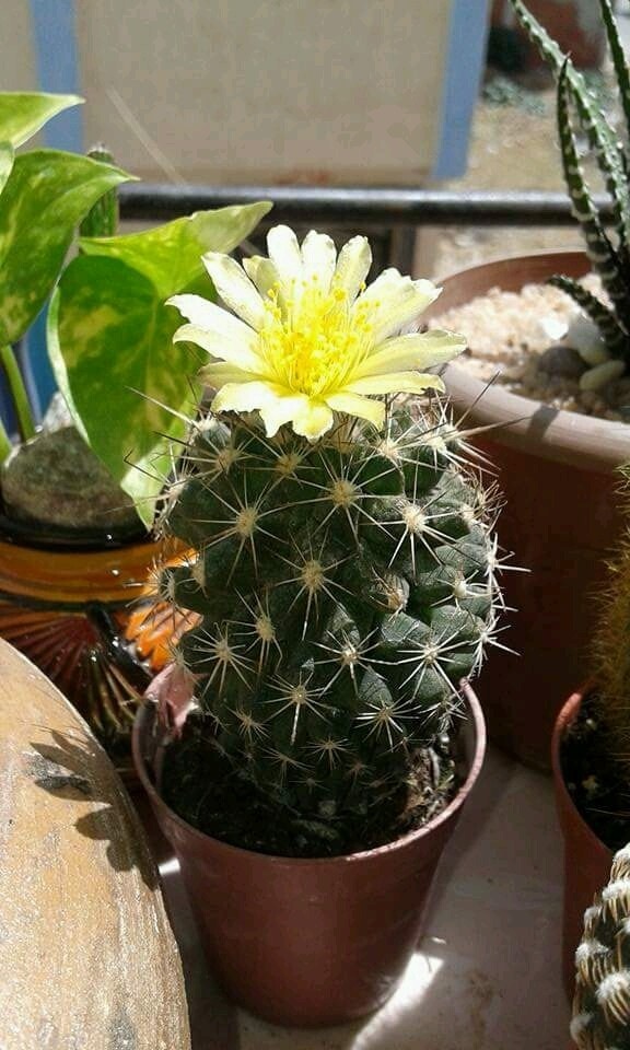 Cactus - Magazine cover