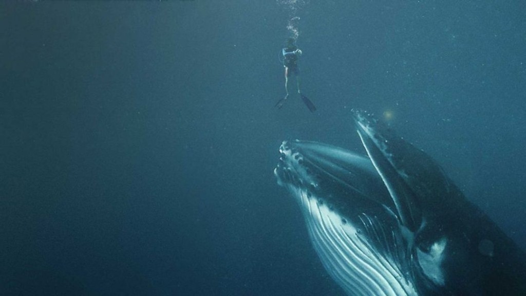 What If You Were Swallowed by a Whale?